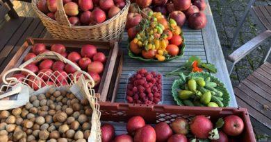 Afgrøder fra villahaven